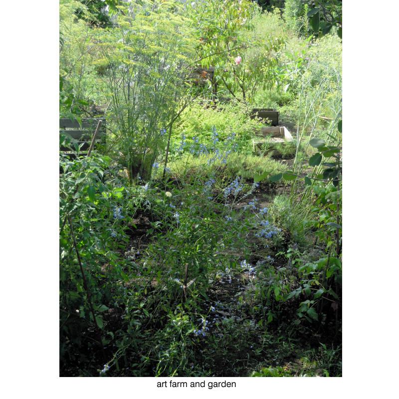8月の庭/art farm & garden_b0290469_10144629.jpg