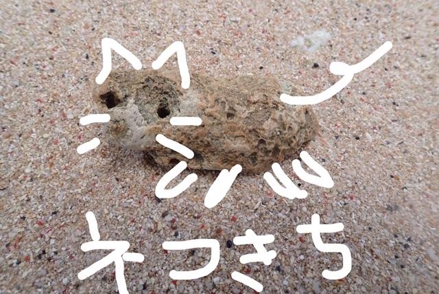8月3日 ナーマ浜とネコ吉_b0158746_10525825.jpg