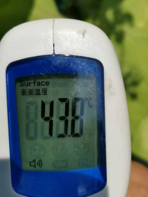 緑のカーテン(ゴーヤ・アサガオ)栽培実験R3.7.26_d0338682_14160595.jpg