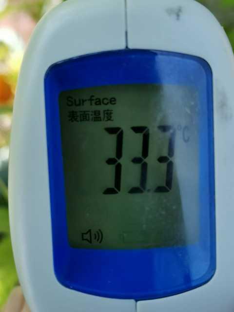 緑のカーテン(ゴーヤ・アサガオ)栽培実験R3.7.26_d0338682_14234157.jpg
