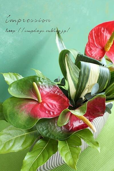 定期装花から アンスリューム:トリニダード_a0085317_20121679.jpg