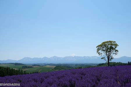 四季彩の丘からVOL.3~6月の美瑛_d0340565_19314273.jpg