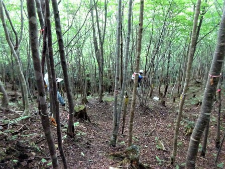 みんなの森活動日記_d0105723_07563507.jpg