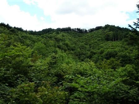 みんなの森活動日記_d0105723_07570828.jpg
