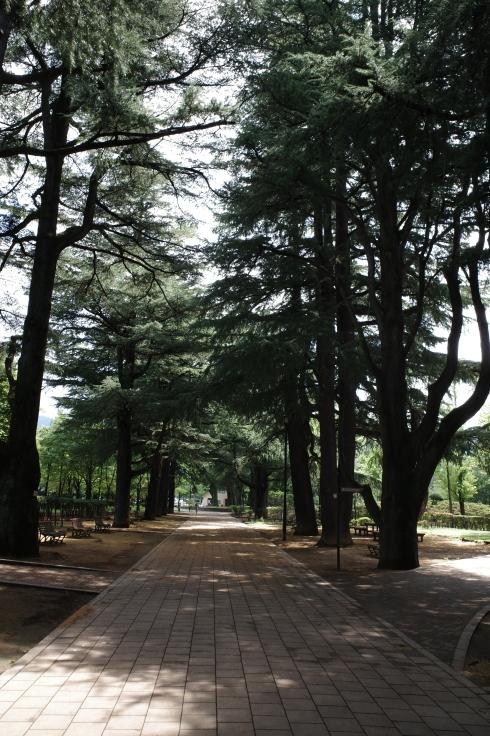 ブロンプトンと夏の長野県へ その4 ~ あがたの森文化会館  松本民芸館_a0287336_18020078.jpg