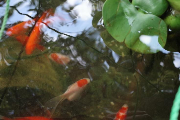 ブロンプトンと夏の長野県へ その4 ~ あがたの森文化会館  松本民芸館_a0287336_18283447.jpg