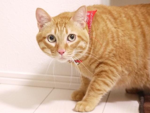 猫のお留守番 トラキチくん編。_a0143140_20483720.jpg