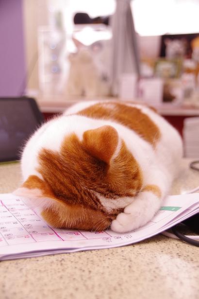 眠い・・・。_a0028451_14112143.jpg