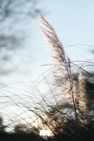 風のように_f0282759_19230724.jpg