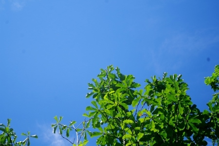 真夏のお天気です。_f0114346_08253526.jpg