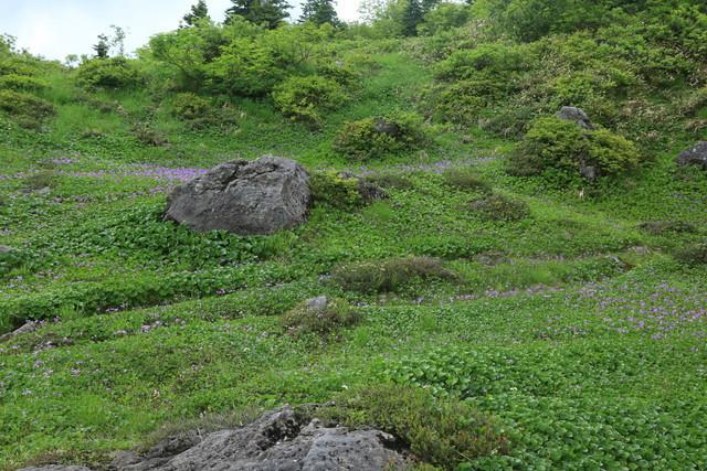 2021夏 登山の記録(火打山)_c0337257_20330946.jpg