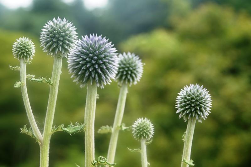 六甲高山植物園_b0227552_16275293.jpg