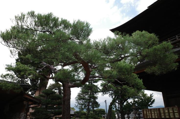 ブロンプトンと夏の長野県へ その8 ~ 善光寺_a0287336_20190346.jpg
