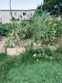 台風9号の過ぎ去った畑です_f0079749_18012198.jpg
