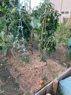 台風9号の過ぎ去った畑です_f0079749_18032762.jpg