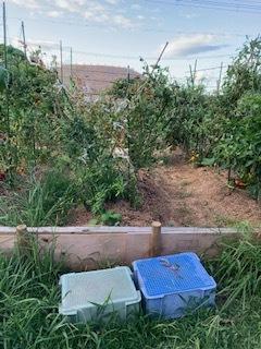 台風9号の過ぎ去った畑です_f0079749_18042286.jpg