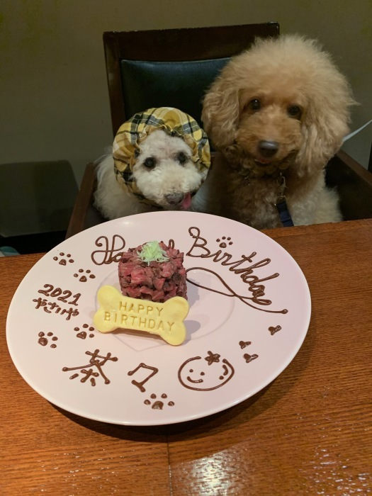 2021.8.9  茶々 15歳のお誕生日ですおめでとう_a0083571_13082489.jpg