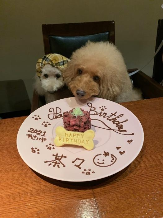 2021.8.9  茶々 15歳のお誕生日ですおめでとう_a0083571_13082891.jpg