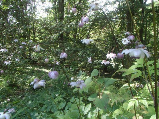 今の庭の花たち_f0064906_14142689.jpg