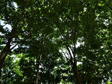 みんなの森活動日記_d0105723_18241505.jpg
