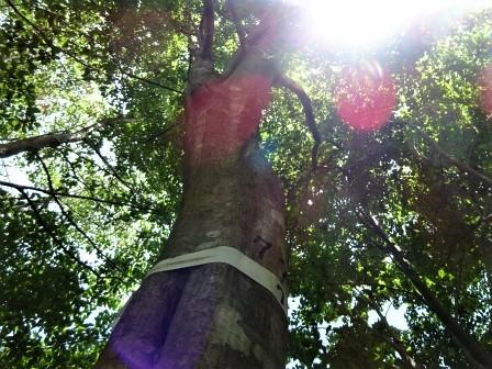 みんなの森活動日記_d0105723_18242657.jpg