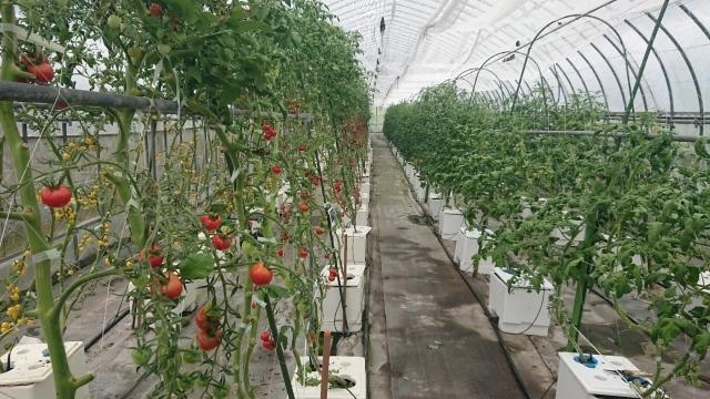 トマトの名産地!日南町でプチトマトに舌鼓♪_f0007926_16291393.jpg