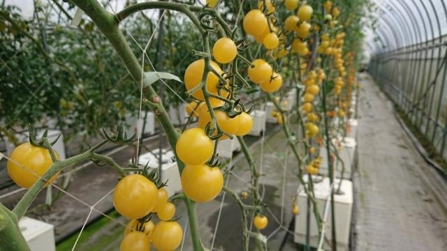 トマトの名産地!日南町でプチトマトに舌鼓♪_f0007926_16292532.jpg
