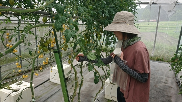 トマトの名産地!日南町でプチトマトに舌鼓♪_f0007926_16293009.jpg