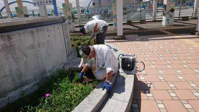 名古屋港水族館前花壇の植栽R3.8.4_d0338682_09451741.jpg
