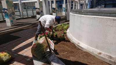 名古屋港水族館前花壇の植栽R3.8.4_d0338682_09530854.jpg