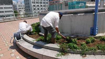名古屋港水族館前花壇の植栽R3.8.4_d0338682_09532412.jpg
