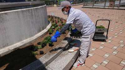 名古屋港水族館前花壇の植栽R3.8.4_d0338682_09534372.jpg
