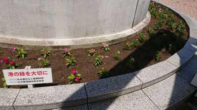 名古屋港水族館前花壇の植栽R3.8.4_d0338682_09551642.jpg