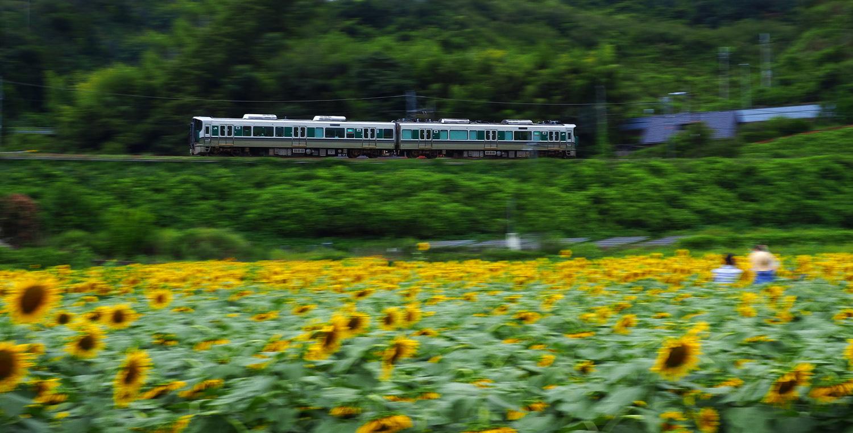 ヒマワリ電車  №4_e0254493_16063062.jpg