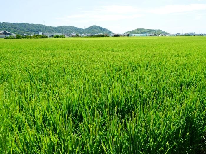 田園風景  2021-08-15 00:00   _b0093754_16565447.jpg