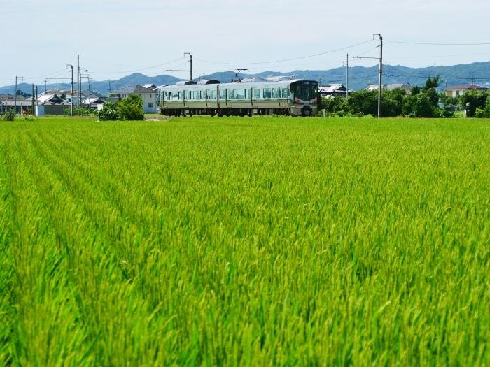 田園風景  2021-08-15 00:00   _b0093754_16573278.jpg
