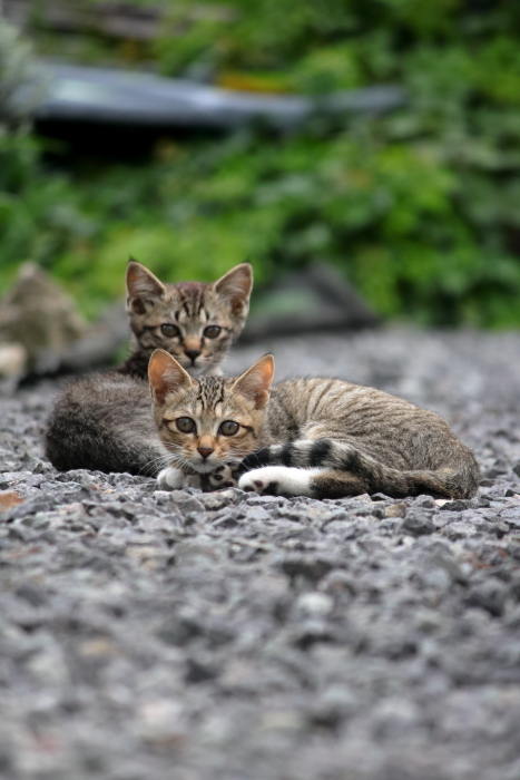 猫ファミリー@2021夏_f0083400_11002852.jpg