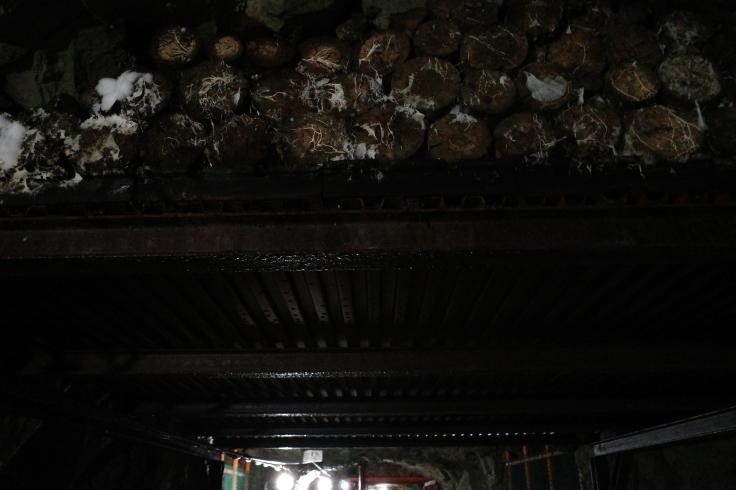 ブロンプトンと夏の長野県へ その12 ~ 松代象山地下壕 (松代大本営跡)_a0287336_21241304.jpg