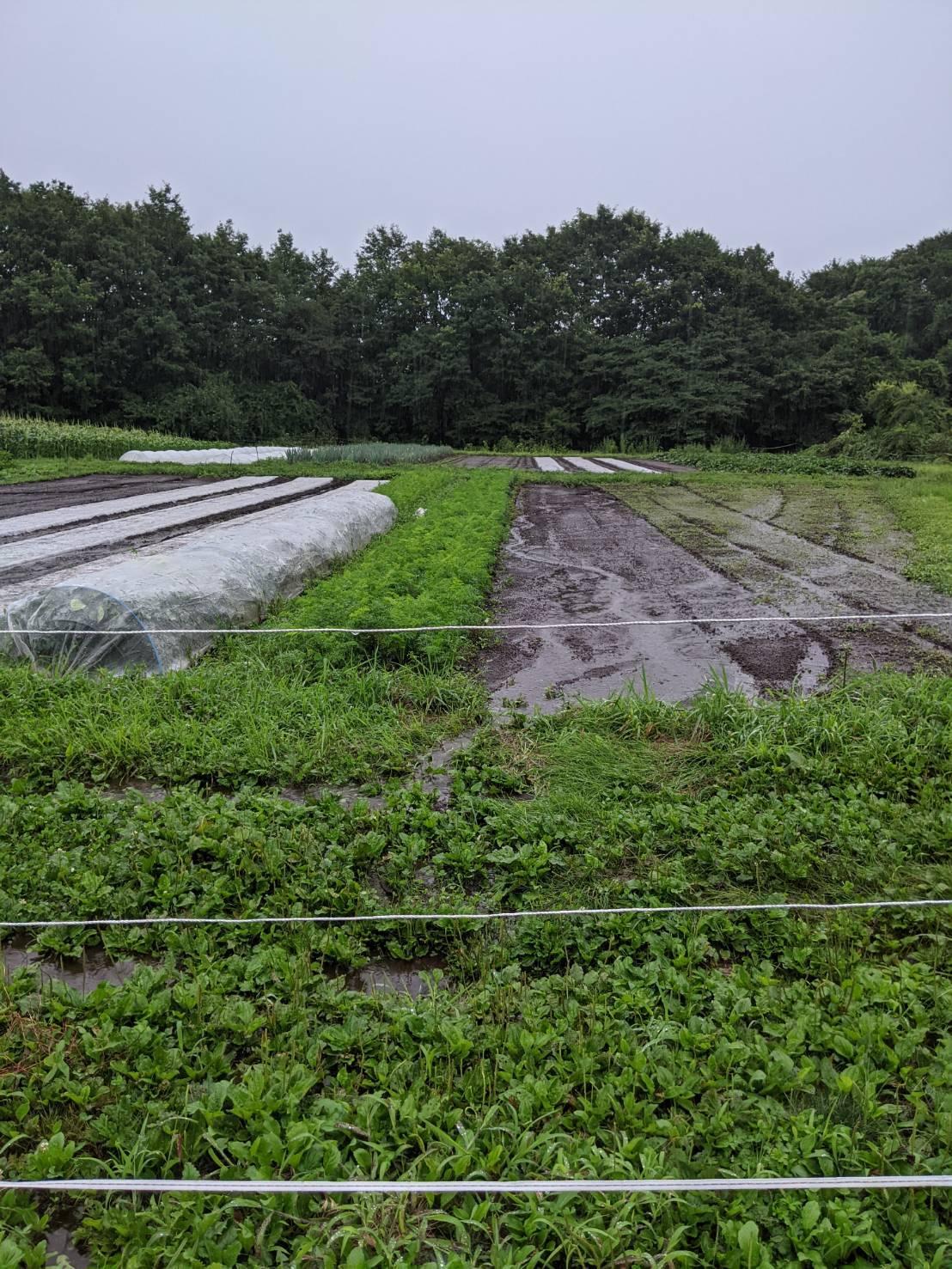 2021年お盆の大雨の記録_c0110869_06451438.jpg