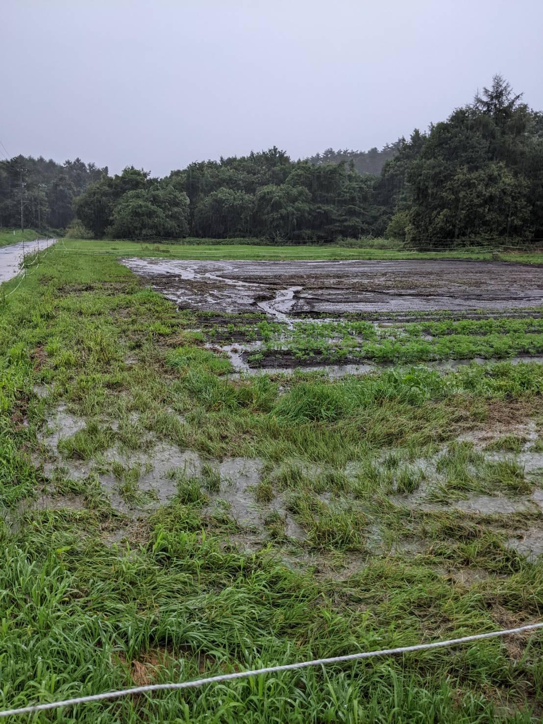 2021年お盆の大雨の記録_c0110869_06454761.jpg
