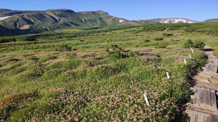 大雪山黒岳へ!!『神々の遊ぶ庭』と呼ばれる絶景をトレッキング - Trek Daisetsuzan National Park_b0108109_00410534.jpeg