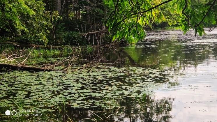 ただただ美しかった夕刻の知床五湖 - Shiretoko five lakes landscape_b0108109_20454151.jpeg