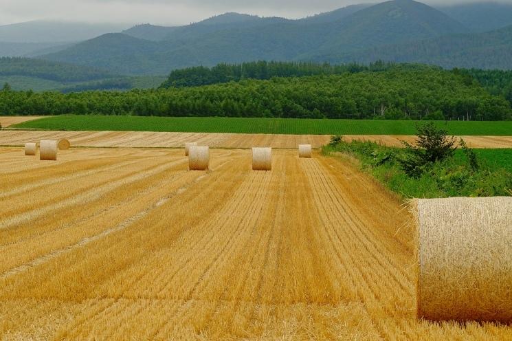 斜里の広域農道探訪 - Rural landscape with straight farm road of Shari_b0108109_21512095.jpeg