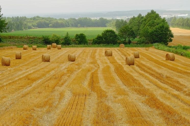 斜里の広域農道探訪 - Rural landscape with straight farm road of Shari_b0108109_21540330.jpeg