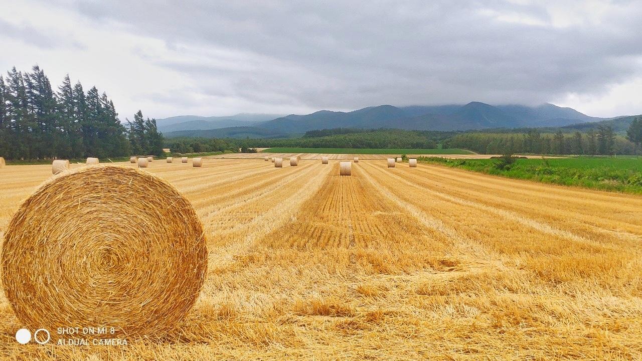斜里の広域農道探訪 - Rural landscape with straight farm road of Shari_b0108109_21542228.jpeg