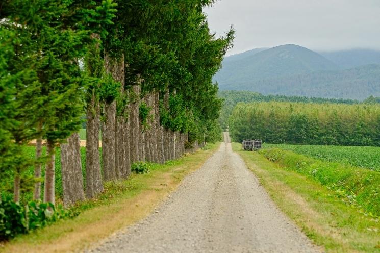 斜里の広域農道探訪 - Rural landscape with straight farm road of Shari_b0108109_21555808.jpeg