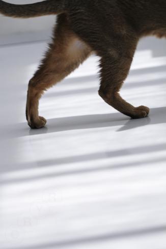 [猫的]朝日に向かって_e0090124_10485970.jpg