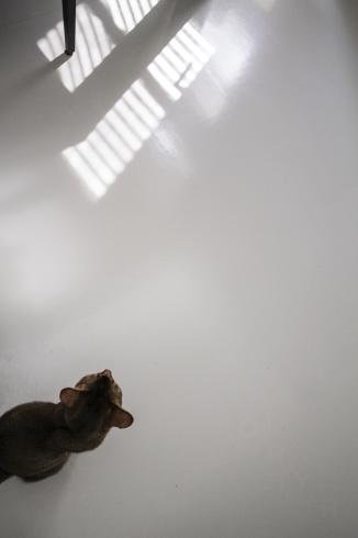 [猫的]午後の迷い_e0090124_17524135.jpg