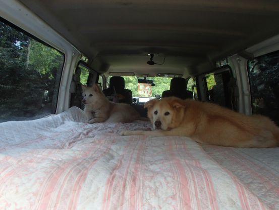 えっちゃんの先輩犬_f0064906_15060902.jpg