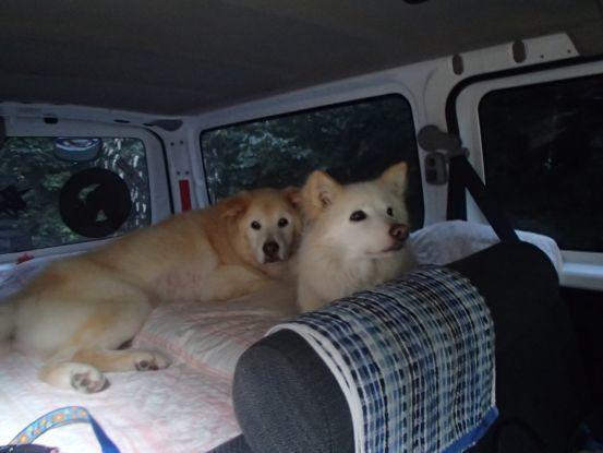 えっちゃんの先輩犬_f0064906_15063473.jpg